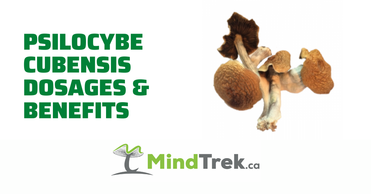 Psilocybe Cubensis Dosages and Benefits