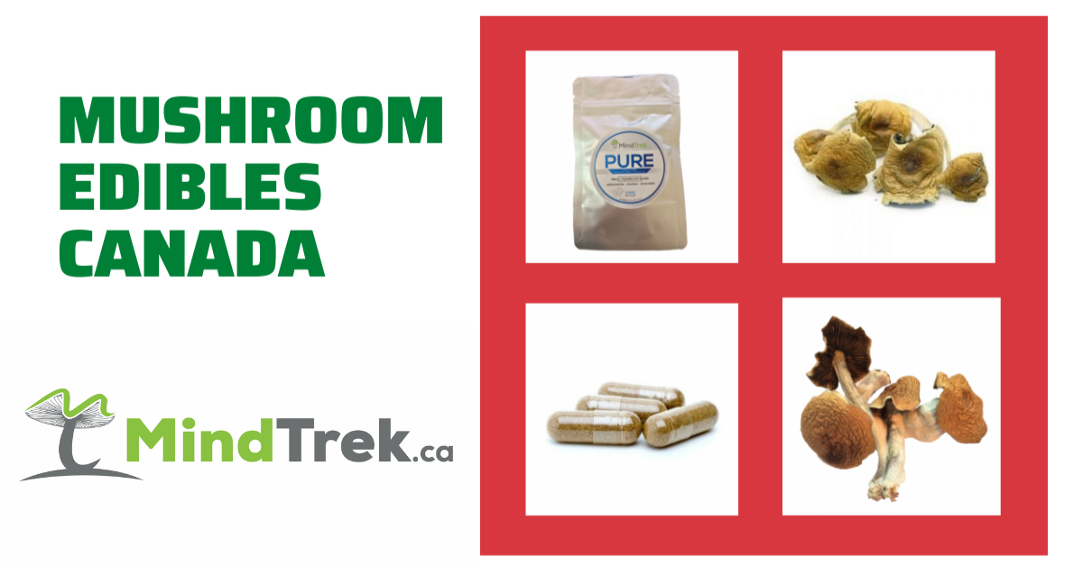 Magic Mushroom Edibles – Buy Shroom Edibles Online in Canada