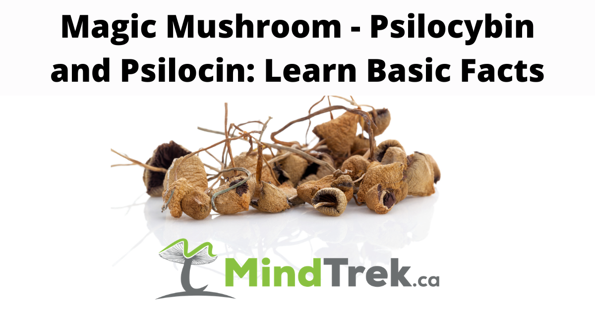 Magic Mushroom - Psilocybin and Psilocin: Learn Basic Facts