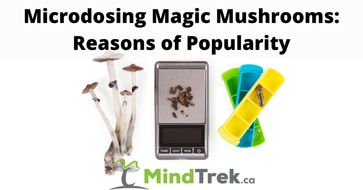 Microdosing Magic Mushrooms 1